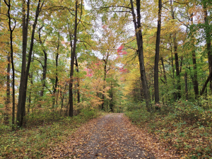Take a Hike: New Holiday Traditions